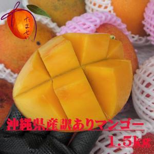 【送料無料】訳あり沖縄県産完熟 マンゴー 約1.5kg【発送6月中旬〜8月上旬】