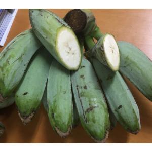 沖縄県産・ 調理用バナナ 2kg(約10〜15本) 【常温発送につきチルド商品と同梱不可】【発送8〜11月】