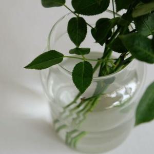 リューズガラス フラワーベース トゥールL Lサイズ Horn Please 志成販売 372053 フラワーベース 木 花 フラワー フラワーグラス 花瓶 ガラス|merci-p|02