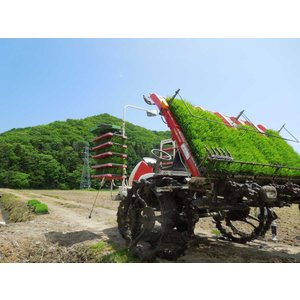 黒米きたのむらさき500g|mhfarm|09