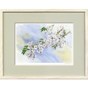 水彩画(鳥-花)永清文明 《さくら》大衣判(50.9×39.4)(ジクレー版画)|micbox-art-shop
