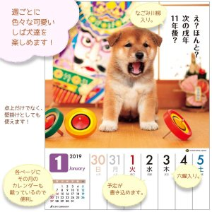 アクティブコーポレーション 2019年 犬 柴犬 カレンダー 週めくり 卓上 だってシバだもの。 A...