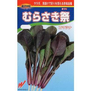 赤紫小松菜(むらさき祭)
