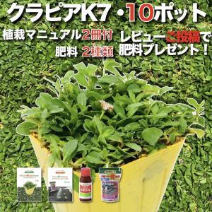 【レビュー特典あり】 クラピア K7 (白) 9cmポット苗 10鉢 すくすくセット 有機一発肥料 ...