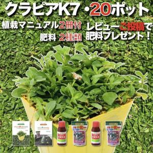 【レビュー特典あり】  クラピア K7 (白) 新品種  9cmポット苗 20鉢 すくすくセット 有...