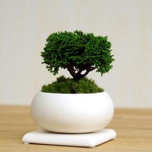 壮大な景色をお楽しみください【連山ヒノキの盆栽・下皿セット】
