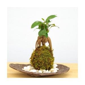 気軽に育てられる!「苔玉」で始めるグリーン生活