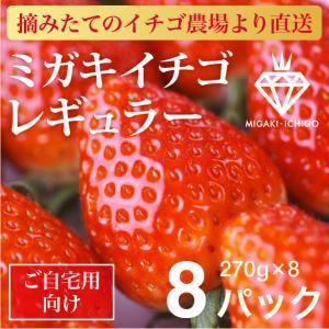 いちご ミガキイチゴ スタンダード(ご自宅用)8パック 275g×8|migaki-ichigo