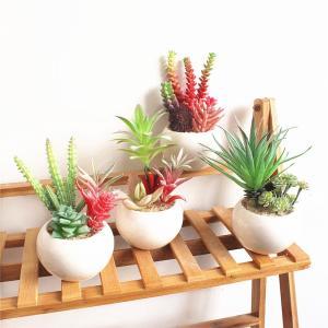 カラフルで色々な形の多肉植物の寄せ植えはお部屋をおしゃれで明るく彩ります  【サイズについて】 平均...