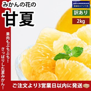 甘夏 あまなつ 愛媛産 訳あり 約2.5kg 送料無料|mikan-hana