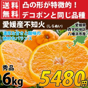 デコポンと同品種 不知火 秀品 約7kg 濃厚  甘い 送料無料  愛媛産 3営業日以内に発送|mikan-hana