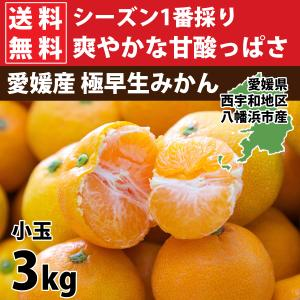 みかん 小玉みかん ミカン 訳あり 3kg 送料無料|mikan-hana