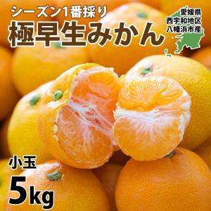 みかん 訳あり 5kg  送料無料 箱買い 甘い 小玉みかん 3営業日以内に発送|mikan-hana