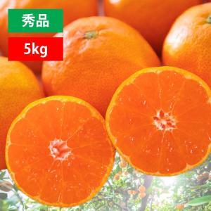 みかん ミカン 送料無料 5kg 極早生 愛媛みかん 秀品|mikan-hana