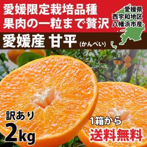 甘平 かんぺい 愛媛産 訳あり2.5kg 送料無料 2セット購入で1kg増量 3営業日以内に出荷|mikan-hana
