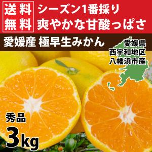 みかん 愛媛産 秀品 3kg 送料無料 3営業日以内に出荷|mikan-hana