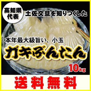 高知県代表大箱10kg送料無料ガキぶんたん(小玉)!ココだけ...