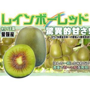 愛媛産 レインボーレッド2kg 平均糖度20度超!キウイの王様!送料無料
