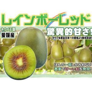 愛媛産 レインボーレッド4kg 平均糖度20度超!キウイの王様!送料無料