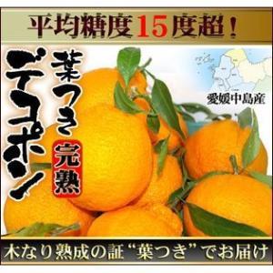 愛媛産 葉つき完熟デコポン4kg 送料無料 訳あり・不揃い...