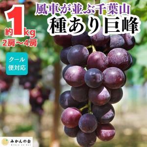【先行予約】 送料無料 有田の 種あり巨峰 1kg 和歌山県産  産地直送 ぶどう 葡萄 フルーツ 巨峰 葡萄 フルーツ 果物 箱買|mikannokai