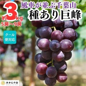 【先行予約】 送料無料 有田の 種あり巨峰 3kg 和歌山県産  産地直送 ぶどう 葡萄 フルーツ 巨峰 葡萄 果物 箱買 クール便対応|mikannokai