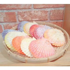 愛媛県産 ホタテ ヒオウギ貝 カラフル シェル 貝殻 10枚セット mikawaya-chana