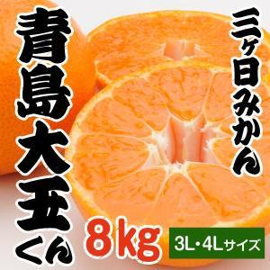 【青島みかん】三ケ日みかん 青島大玉くん 8kg...