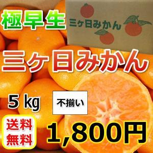 三ケ日みかん極早生不揃い(不揃い・多少キズあり)(5kg)|mikkabimikan