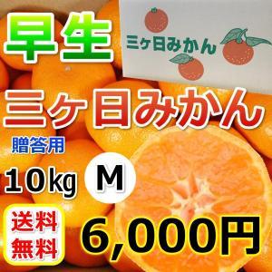 三ケ日みかん贈答用早生Mサイズ(10kg)