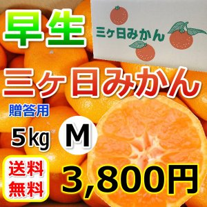 みかん 三ケ日みかん 贈答 用早生 M サイズ(5kg)|mikkabimikan