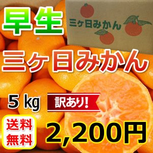 みかん 三ケ日みかん 早生 訳あり (不揃い・キズ)(5kg)の画像