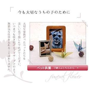 アートフォーシーズン ペット用 お供え花エンジェル プリザーブドフラワー (ピンク) million-got
