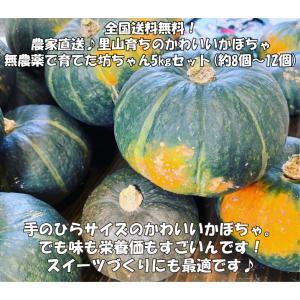 全国送料無料♪農家直送!里山育ちのかわいいかぼちゃ 無農薬 坊ちゃん 5kgセット(8個〜12個) minakuchi-farm