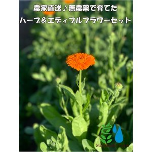 農家直送!里山育ちの無農薬ハーブ&エディブルフラワーセット 滋賀県WEB物産展 いまだから地産地消|minakuchi-farm