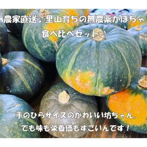 農家直送!里山育ちの無農薬かぼちゃ5種食べ比べセット 滋賀県WEB物産展 いまだから地産地消 minakuchi-farm