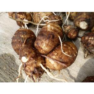 農家直送!里山育ちの無農薬さといも(大野芋)3kgセット 泥付き【滋賀県WEB物産展】|minakuchi-farm