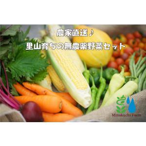 【有機JAS認証】農家直送!里山育ちの無農薬野菜セット【Sサイズ】 オーガニック|minakuchi-farm