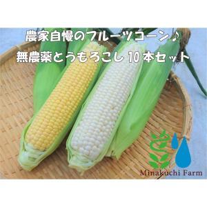 【有機JAS認証】農家直送!里山育ちの無農薬とうもろこし【おおもの】 10本セット オーガニック|minakuchi-farm