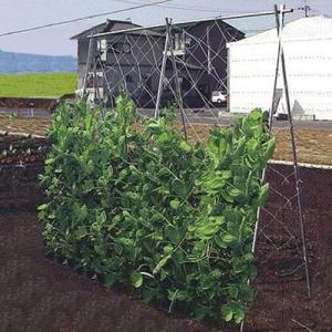 つるもの栽培セット TR-70 (幅70〜120cm×高1.8m : 奥行き7m)|minatodenki