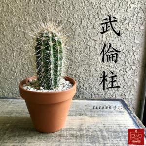 実店舗からPickUp 武倫柱 サボテン 素焼き鉢 多肉植物 インテリア 観葉植物 おしゃれ かわいい|mingle-h
