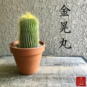 実店舗からPickUp 金晃丸 サボテン 素焼き鉢 多肉植物 インテリア 観葉植物 おしゃれ かわいい|mingle-h