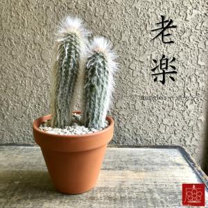 実店舗からPickUp 老楽 サボテン 素焼き鉢 多肉植物 インテリア 観葉植物 おしゃれ かわいい|mingle-h