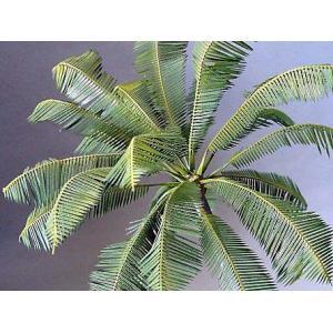 ココヤシII  Coco nuts palm II 1/35-1/48[KAM-A-38] miniature-park