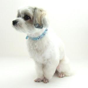 犬用 首輪 小型犬用 チェリーカラー 首回 17-21cm|minnaegao