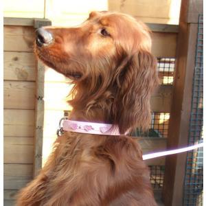 犬用 首輪 大型犬用 チェリーカラー 首回り 35-43cm|minnaegao