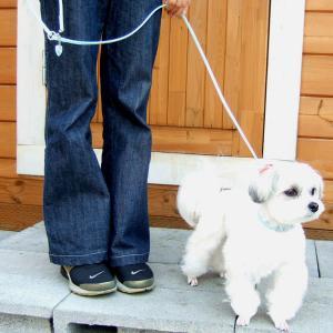 犬用 リード 小型犬用 ハートチャームリード SS|minnaegao