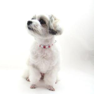 犬用 首輪 小型犬用 フレッシュハートカラー 首囲18-22cm|minnaegao