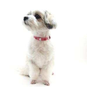 犬用 首輪 小型犬用 フレッシュハートカラー 首囲22-26cm|minnaegao