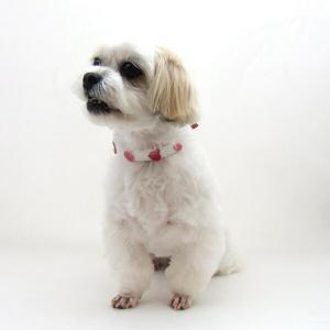 犬用 首輪 小型犬用 フレッシュハートカラー首囲 26-32cm|minnaegao